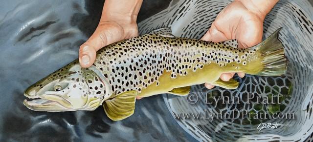 1 fish fin watermark 20x9