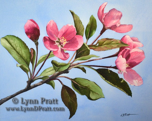 apple blossom 20x16_watermark