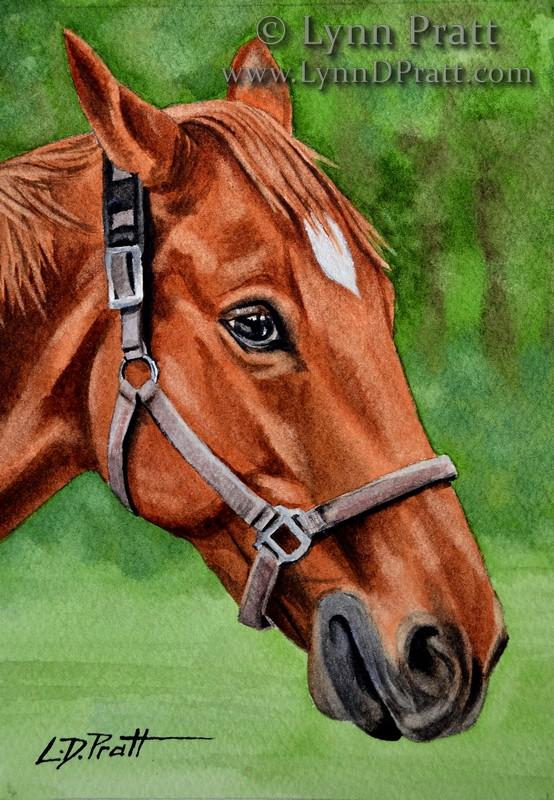 horse Maximus 6x9 watermark