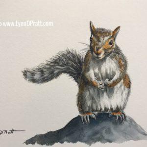 squirrel 10x8b
